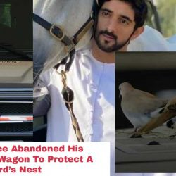 Dubai Prince Abandoned His Mercedes G-Wagon To Protect A Bird's Nest